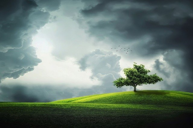 osamělý strom na louce