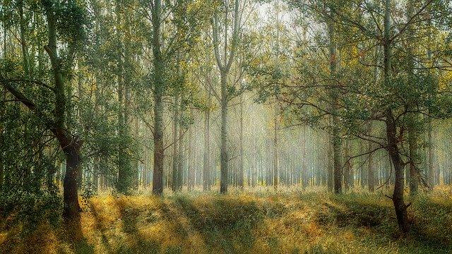 listnatý les v létě